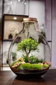 Terrarium Products